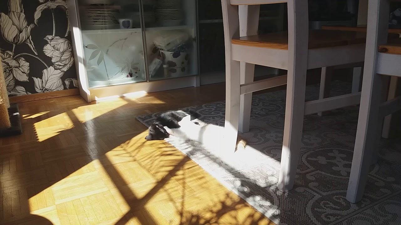 todella söpö hyvännäköinen 100% aito matto unessa