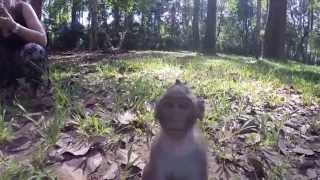 kidnapped baby monkey