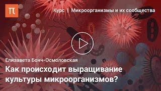 видео Питательные среды