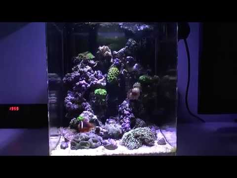 35L Nano Reef HD (Cyprus) UPDATE