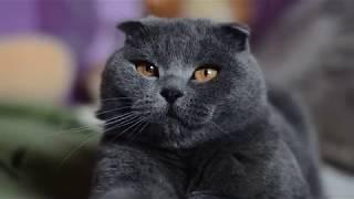 Кот Тима будни дни смотреть онлайн в хорошем качестве