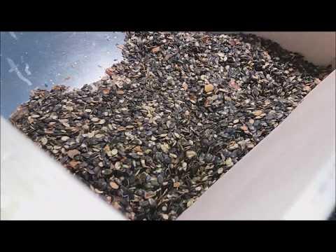 pumpkin seeds cleaning 2018 (graines de citrouille, semi di zucca, kürbiskerne, tökmag)