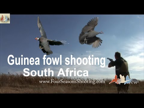Driven Guinea Fowl Shoot in South Africa-£175 per day for season 2018