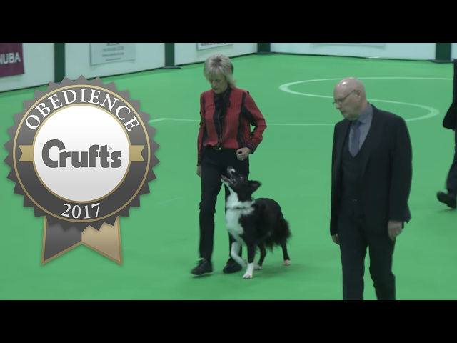 Obedience Championship - Dogs - Part 2 | Crufts 2017