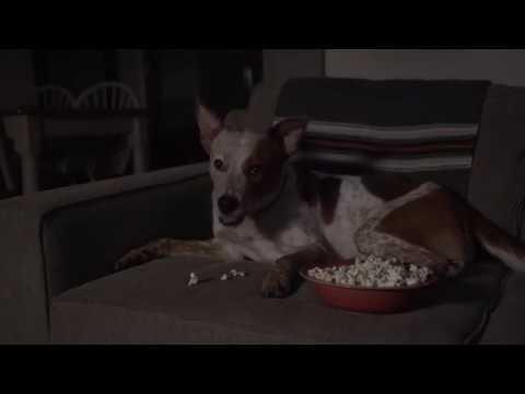 Household Horrors: One SCARY GOOD BarkBox
