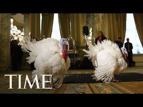 Download Youtube: Turkey Pardon: President Trump Pardons National Thanksgiving Turkey In Annual Ritual   LIVE   TIME
