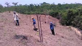 Suku Baduy Bertanam Padi Huma