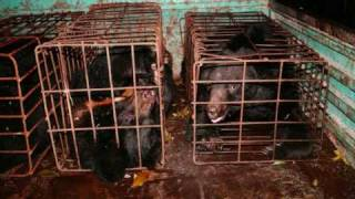 Animals Asia - Help stop bear farming