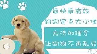 狗狗定点大小便方法最快最有效方法加理念让狗狗不再乱尿