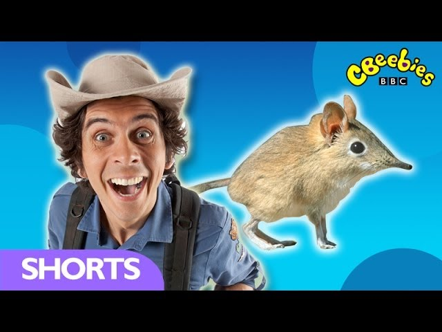 CBeebies: Andy's Wild Adventures - Sengis