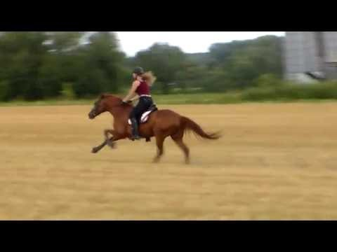 Fastest Horse in the world?