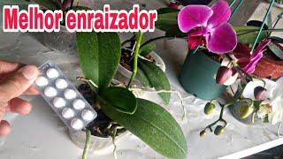 O melhor enraizador para todos tipos de plantas – Prático e barato