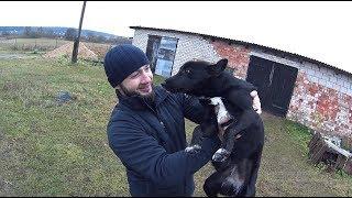 Собака Соня которую я спас от хозяина. Гостиница из заброшенной фермы.