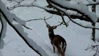 Hayedo de Quinto Real - Kintoa - Navarra - Turismo - Naturaleza - Nº 1