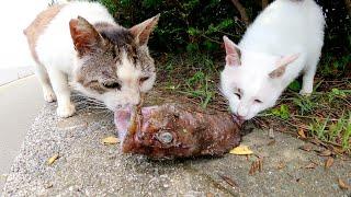猫の上下関係!?ボス猫が気弱な猫から大きな魚を横取りする
