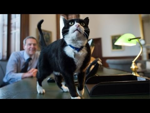 Cats Of The British Government