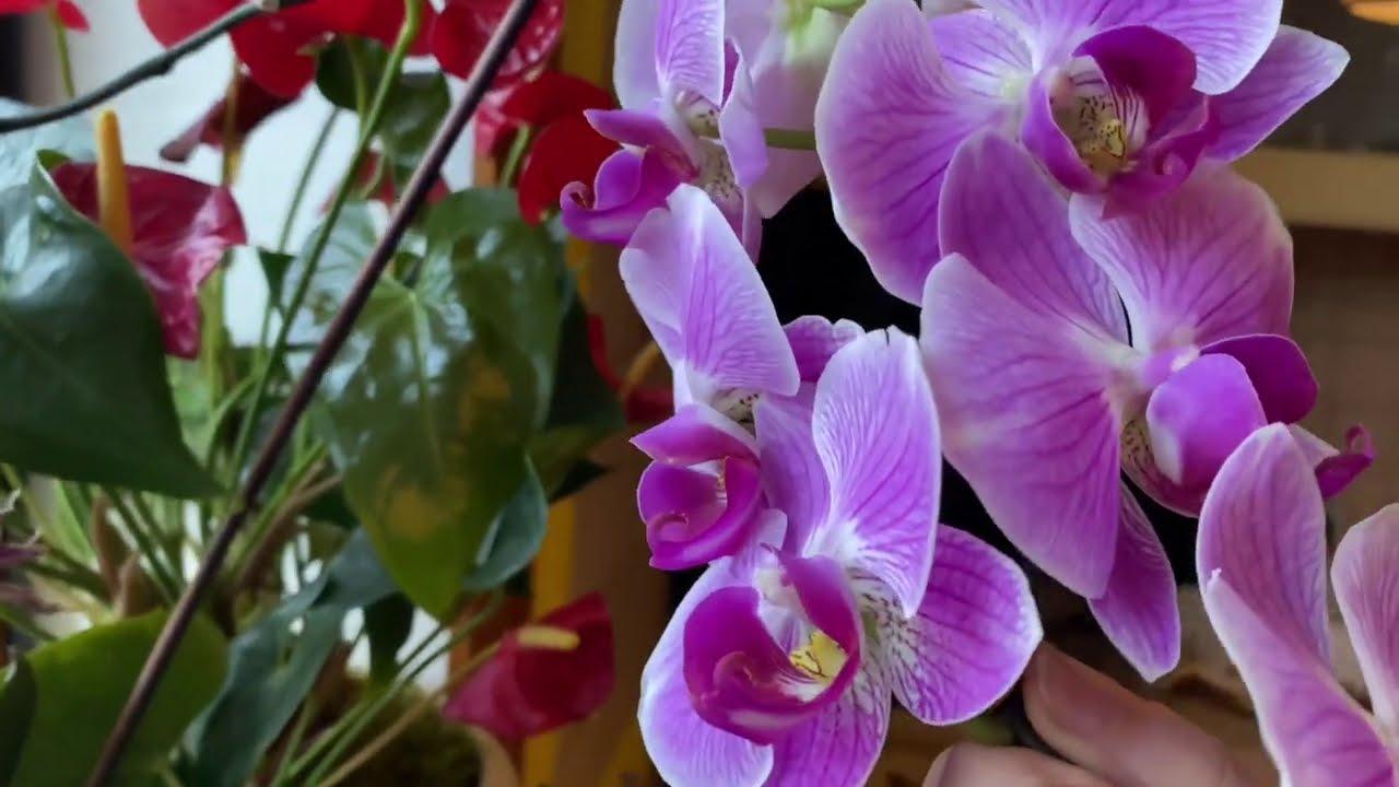 Любимые комнатные цветы в декабре / неприхотливые цветы для дома