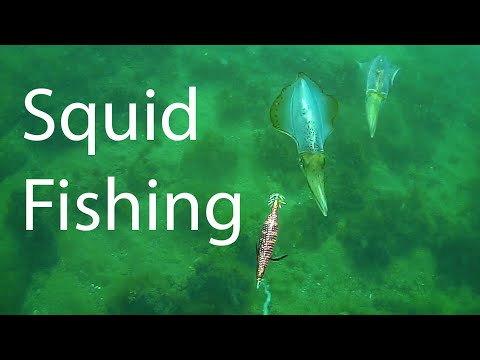 Squid Fishing Melbourne Port Phillip Bay Techniques To Use A Egi Jig Salmon