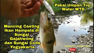 Mancing Hampala Sungai Gajah Wong & Code Yogyakarta