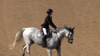 of CARLISCO ridden by ADDISON PIPER from ShowNet