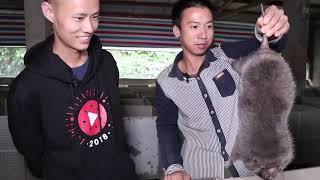 """Vlog008 """"红烧竹鼠""""来了!厨师长王刚去华农兄弟家做客,带你们看看还有什么理由吃竹鼠"""