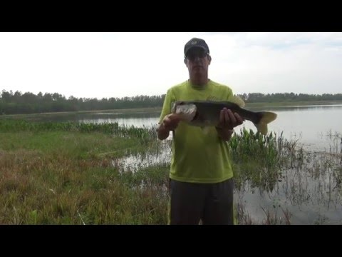 spring topwater contest – bama frogs, Soft Baits