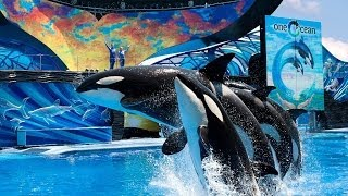 SeaWorld Orlando Florida One Ocean