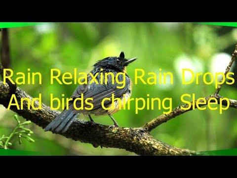 Rain Relaxing Rain drops and Birds chirping sleep