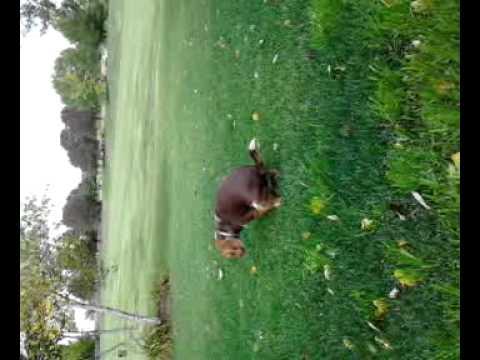 My dog has stringy poop! - YouTube | 480 x 360 jpeg 18kB