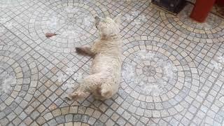 Hund einschläfern und erlösen von seinem Leiden ist in Thailand nicht möglich eine Glaubensfrage!!!!