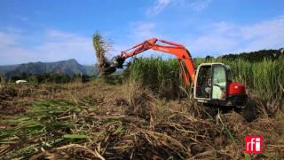 Canne à sucre-les producteurs réunnionais sur le qui-vive