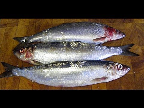 HERRINGS,(Those Silver Darlings)How to prepare and cook herrings,with a mustard and oat meal crust.