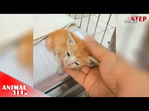 Tiny Kitten Got Bite By Big Dog And Suffered With Severely Injured On Her Tummy