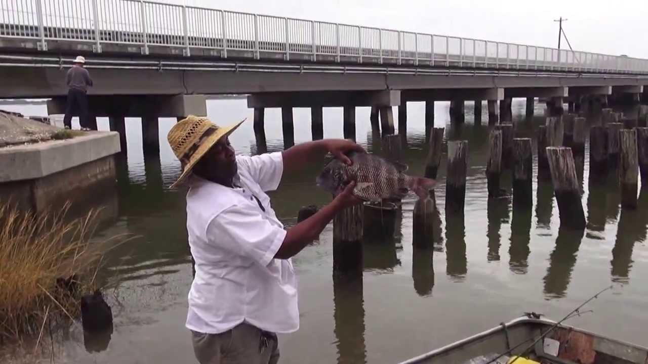 Sheepshead fishing cedar key fl youtube for Cedar key fishing