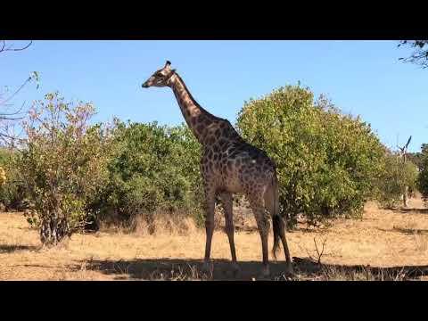 Southern Africa - South Africa, Botswana, Zimbabwe - Intrepid tour, July 2017