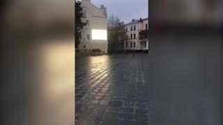 Безпритульні собаки на ранковій Михайлівській у Житомирі - Житомир.info