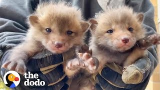 7-baby-foxes-reunite-with-mom-after-being-pulled-from-under-a-deck-the-dodo