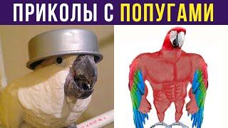 ПРИКОЛЫ С ПОПУГАЯМИ   Мемозг #308