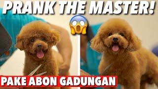 ABON PALSU! THE MASTER GA SADAR! PARAH BGT 😡 | THE GOLDEN  FAMILY
