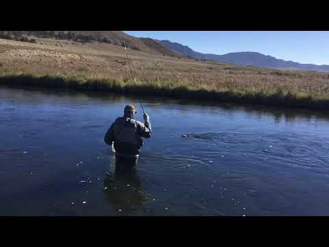 Fly Fishing Dream Stream With Dad Trico Hatch, Dry Only Rules! #26 Trico