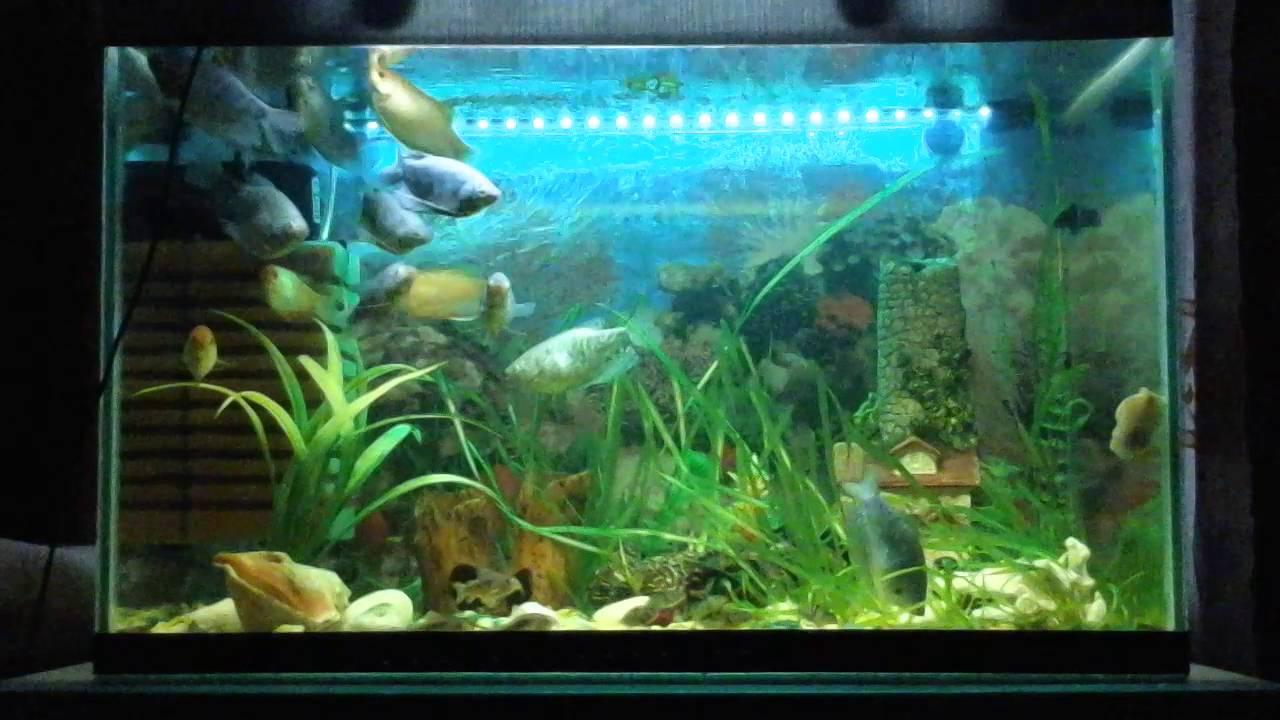 Лампа погружная трехцветная, 50 см. Данная лампа предназначена для освещения аквариума. Модуль имеет три разных цвета свечения, с помощью которых можно создать прекрасную разноцветную подсветку, с которой аквариум будет смотреться более привлекательней и интересней. Лампа.