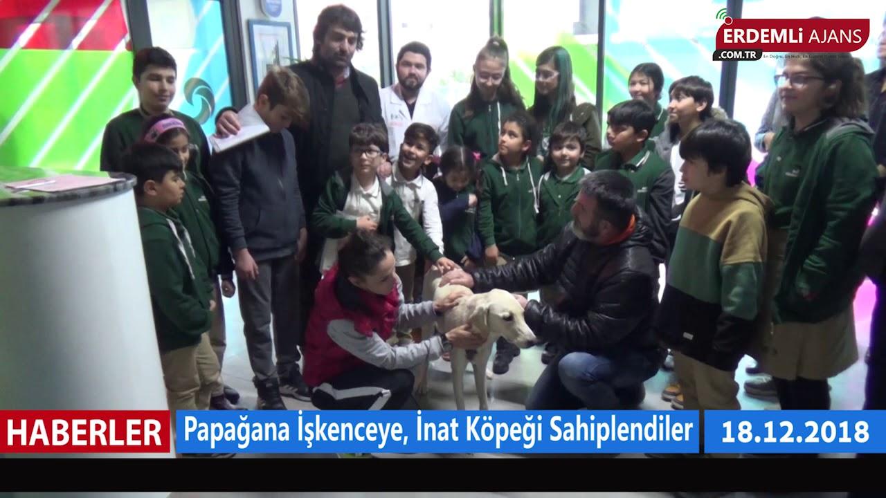 Papağana İşkenceye İnat Köpeği Sahiplendiler