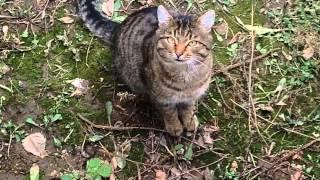 Котенок говорит Вам привет