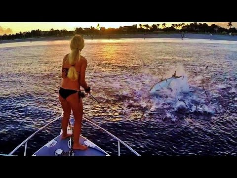 Best Fishing The Mullet Run For Jumping Florida Tarpon Video