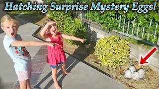 Mystery Eggs Found by Pool Hatch!!! Hatchimals Mystery Eggs! (New Pets)