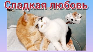 Сладкая любовь или любви много не бывает Сказка на ночь