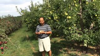 Apple farm in USA, September 5, 2015, presented by Ram Prasad Khanal