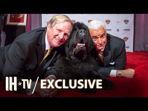 Beverly Hills Dog Show 2020 (NBC) Delayed Due To The Coronavirus