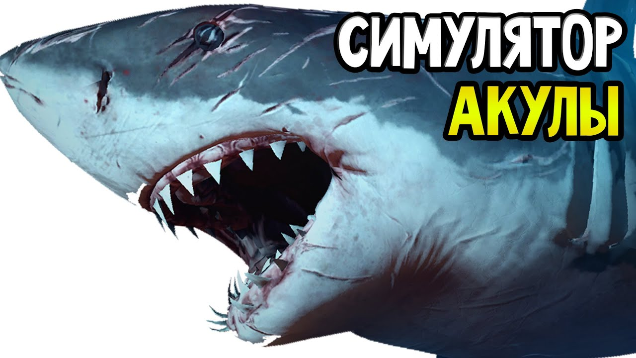 Скачать симулятор акулы убийцы
