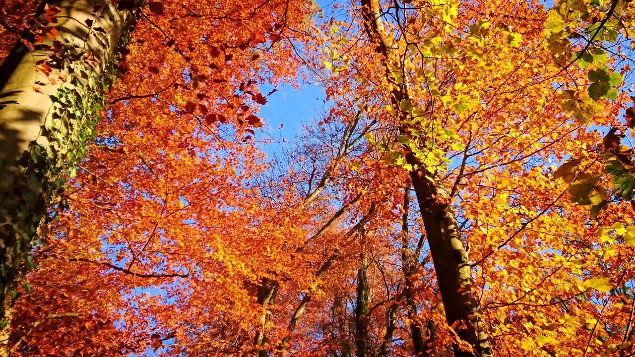 Free Fall Foliage Wallpaper Autumn Colors In Switzerland 4k Fall 2015 Youtube